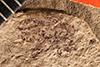 http://mczbase.mcz.harvard.edu/specimen_images/entomology/paleo/large/PALE-1824_Geralophus_repositus_type.jpg