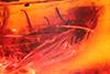 http://mczbase.mcz.harvard.edu/specimen_images/entomology/paleo/large/PALE-18252_syn1_Syrphidae.jpg