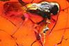 http://mczbase.mcz.harvard.edu/specimen_images/entomology/paleo/large/PALE-18257_Brachycera_1.jpg