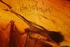 http://mczbase.mcz.harvard.edu/specimen_images/entomology/paleo/large/PALE-18289_syn3_Chironomidae.jpg