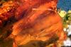 http://mczbase.mcz.harvard.edu/specimen_images/entomology/paleo/large/PALE-18292_Dolichopodidae.jpg
