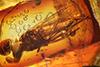 http://mczbase.mcz.harvard.edu/specimen_images/entomology/paleo/large/PALE-18341_Dolichopodidae.jpg
