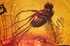 http://mczbase.mcz.harvard.edu/specimen_images/entomology/paleo/large/PALE-18367_Dolichopodidae.jpg