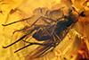 http://mczbase.mcz.harvard.edu/specimen_images/entomology/paleo/large/PALE-18373_Dolichopodidae.jpg