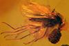 http://mczbase.mcz.harvard.edu/specimen_images/entomology/paleo/large/PALE-18394_Palaeomedeterus_sp.jpg