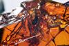 http://mczbase.mcz.harvard.edu/specimen_images/entomology/paleo/large/PALE-18395_Dolichopodidae.jpg