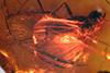 http://mczbase.mcz.harvard.edu/specimen_images/entomology/paleo/large/PALE-18398_Dolichopodidae.jpg