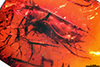 http://mczbase.mcz.harvard.edu/specimen_images/entomology/paleo/large/PALE-18402_Dolichopodidae_qm.jpg