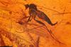 http://mczbase.mcz.harvard.edu/specimen_images/entomology/paleo/large/PALE-18418_Mycetophilidae_qm.jpg