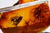 http://mczbase.mcz.harvard.edu/specimen_images/entomology/paleo/large/PALE-18419_Mycetophilidae.jpg
