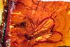http://mczbase.mcz.harvard.edu/specimen_images/entomology/paleo/large/PALE-18419_syn1_Mycetophilidae.jpg
