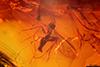 http://mczbase.mcz.harvard.edu/specimen_images/entomology/paleo/large/PALE-18419_syn2_Sciaridae.jpg