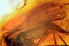 http://mczbase.mcz.harvard.edu/specimen_images/entomology/paleo/large/PALE-18421_Sciaridae_2.jpg