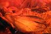 http://mczbase.mcz.harvard.edu/specimen_images/entomology/paleo/large/PALE-18428_Dolichopodidae_2.jpg