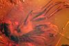 http://mczbase.mcz.harvard.edu/specimen_images/entomology/paleo/large/PALE-18433_Dolichopodidae_2.jpg