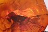 http://mczbase.mcz.harvard.edu/specimen_images/entomology/paleo/large/PALE-18451_Dolichopodidae.jpg