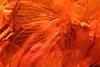 http://mczbase.mcz.harvard.edu/specimen_images/entomology/paleo/large/PALE-18452_syn2_Psychodidae.jpg