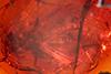 http://mczbase.mcz.harvard.edu/specimen_images/entomology/paleo/large/PALE-18454_Dolichopodidae.jpg