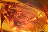 http://mczbase.mcz.harvard.edu/specimen_images/entomology/paleo/large/PALE-18457_Dolichopodidae.jpg