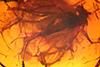 http://mczbase.mcz.harvard.edu/specimen_images/entomology/paleo/large/PALE-18458_Dolichopodidae.jpg