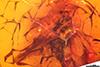 http://mczbase.mcz.harvard.edu/specimen_images/entomology/paleo/large/PALE-18470_Dolichopodidae.jpg