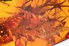 http://mczbase.mcz.harvard.edu/specimen_images/entomology/paleo/large/PALE-18471_Dolichopodidae_2.jpg