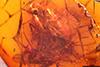 http://mczbase.mcz.harvard.edu/specimen_images/entomology/paleo/large/PALE-18473_Dolichopodidae.jpg