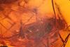 http://mczbase.mcz.harvard.edu/specimen_images/entomology/paleo/large/PALE-18473_syn1_Dolichopodidae.jpg