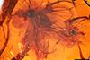 http://mczbase.mcz.harvard.edu/specimen_images/entomology/paleo/large/PALE-18480_Dolichopodidae.jpg