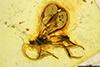 http://mczbase.mcz.harvard.edu/specimen_images/entomology/paleo/large/PALE-18506_syn1_Ichneumonidae.jpg