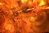 http://mczbase.mcz.harvard.edu/specimen_images/entomology/paleo/large/PALE-18511_Coleoptera_1.jpg