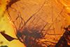 http://mczbase.mcz.harvard.edu/specimen_images/entomology/paleo/large/PALE-18521_Braconidae_qm.jpg