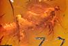 http://mczbase.mcz.harvard.edu/specimen_images/entomology/paleo/large/PALE-18523_Dolichopodidae.jpg