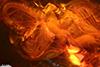 http://mczbase.mcz.harvard.edu/specimen_images/entomology/paleo/large/PALE-18523_syn1_Dolichopodidae.jpg