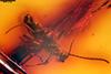 http://mczbase.mcz.harvard.edu/specimen_images/entomology/paleo/large/PALE-18527_Braconidae.jpg