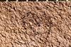 http://mczbase.mcz.harvard.edu/specimen_images/entomology/paleo/large/PALE-1949_Anthonomus_arctus_type_1.jpg
