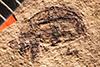 http://mczbase.mcz.harvard.edu/specimen_images/entomology/paleo/large/PALE-200_Geralophus_antiquarius_type.jpg