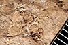 http://mczbase.mcz.harvard.edu/specimen_images/entomology/paleo/large/PALE-2010_Halictus_florissantella_holotype_3.jpg