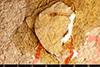 http://mczbase.mcz.harvard.edu/specimen_images/entomology/paleo/large/PALE-2021_Geotiphia_foxiana_holotype_2.jpg