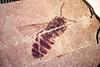 http://mczbase.mcz.harvard.edu/specimen_images/entomology/paleo/large/PALE-20577_Symphyta.jpg
