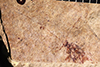 http://mczbase.mcz.harvard.edu/specimen_images/entomology/paleo/large/PALE-20606_Trichoptera_qm.jpg