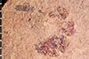 http://mczbase.mcz.harvard.edu/specimen_images/entomology/paleo/large/PALE-20686_Arthropoda.jpg