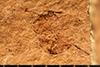 http://mczbase.mcz.harvard.edu/specimen_images/entomology/paleo/large/PALE-2079_Palaeotorymus_typicus.jpg