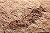 http://mczbase.mcz.harvard.edu/specimen_images/entomology/paleo/large/PALE-2161_Pimpla_rediviva_holotype_2.jpg