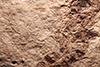 http://mczbase.mcz.harvard.edu/specimen_images/entomology/paleo/large/PALE-2161_Pimpla_rediviva_holotype_3.jpg