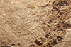 http://mczbase.mcz.harvard.edu/specimen_images/entomology/paleo/large/PALE-2161_Pimpla_rediviva_holotype_4.jpg