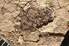 http://mczbase.mcz.harvard.edu/specimen_images/entomology/paleo/large/PALE-217_Geralophus_fossicius_type.jpg