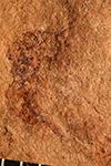http://mczbase.mcz.harvard.edu/specimen_images/entomology/paleo/large/PALE-2188_Ichneumonoidea.jpg