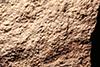 http://mczbase.mcz.harvard.edu/specimen_images/entomology/paleo/large/PALE-2213_Xylonomus_sejugatus_3.jpg