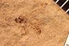 http://mczbase.mcz.harvard.edu/specimen_images/entomology/paleo/large/PALE-2216_Tryphoninae.jpg